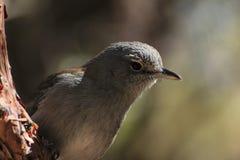 Vogel op een boom Stock Afbeeldingen