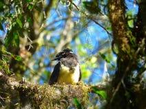 Vogel op een boomtak die wordt neergestreken Royalty-vrije Stock Afbeelding