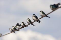 Vogel op een draad Royalty-vrije Stock Afbeelding