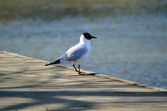 Vogel op een edele stock afbeelding