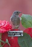 Vogel op een Februari verfraaide omheining wordt neergestreken die Stock Foto's