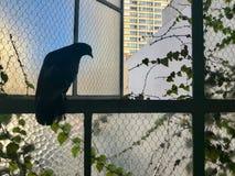 Vogel op een klimop gevoerde glasvensters dat wordt neergestreken Stock Afbeelding