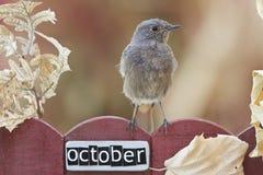 Vogel op een Oktober verfraaide omheining wordt neergestreken die Stock Foto
