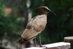 Vogel op een Omheining stock afbeeldingen