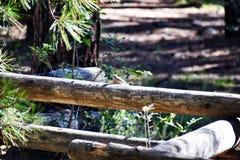 Vogel op een omheining stock afbeelding