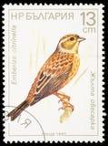 Vogel op een postzegel Stock Afbeelding