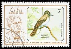 Vogel op een postzegel Stock Foto