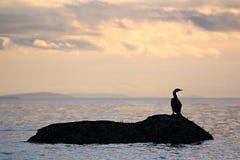 Vogel op een rots Stock Fotografie