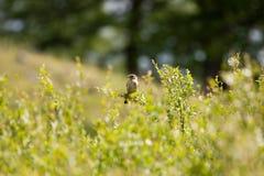 Vogel op een tak stock afbeelding