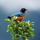 Vogel op een tak. Royalty-vrije Stock Fotografie