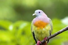 Vogel op een tak Stock Fotografie