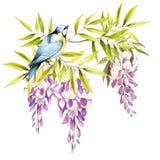 Vogel op een tak van wisteria De hand trekt waterverfillustratie Royalty-vrije Stock Foto