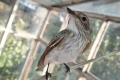 Vogel op een wasserijdraad Royalty-vrije Stock Foto