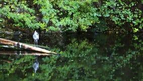 Vogel op het meer stock footage