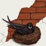 Vogel op het nest Stock Foto