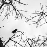 Vogel op het silhouet van de boomtak zonder verlof Stock Foto