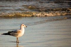 Vogel op het Strand Stock Foto