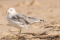 Vogel op het strand Stock Afbeelding