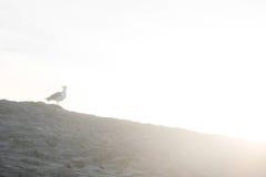 Vogel op het zand stock afbeeldingen