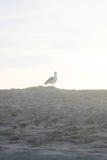 Vogel op het zand stock afbeelding
