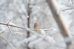 Vogel op ijzige boom branchÐ ¿ Stock Foto