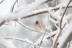 Vogel op ijzige boomtak Stock Fotografie