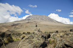 Vogel op Kilimanjaro Stock Fotografie