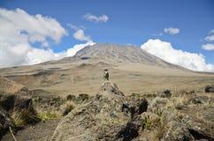Vogel op Kilimanjaro Stock Afbeeldingen