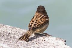Vogel op Meer Stock Foto's