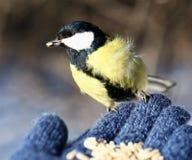Vogel op mijn hand Royalty-vrije Stock Foto's