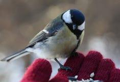 Vogel op mijn hand Stock Foto