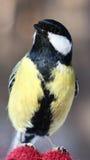 Vogel op mijn hand Stock Foto's