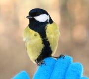 Vogel op mijn hand Stock Fotografie