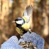 Vogel op mijn hand Royalty-vrije Stock Afbeeldingen