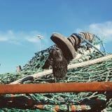 Vogel op netto stock afbeelding
