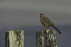 Vogel op post Royalty-vrije Stock Afbeeldingen