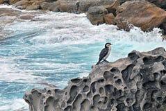 Vogel op Rots stock afbeelding
