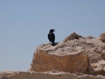 Vogel op rots het tjilpen Royalty-vrije Stock Fotografie