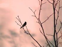 Vogel op tak Stock Foto's