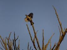 Vogel op tak Stock Foto