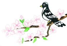 Vogel op tak met witte bloemen, het schilderen Royalty-vrije Stock Afbeelding