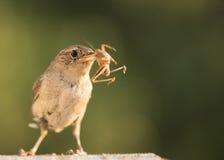 Vogel op vogelhuis Royalty-vrije Stock Foto's