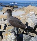 Vogel op zee kant royalty-vrije stock afbeelding