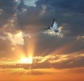 Vogel op zonsondergang royalty-vrije stock afbeeldingen