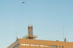 Vogel over het huis Stock Foto