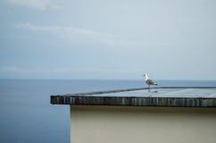 Vogel, overzees en blauwe hemel Royalty-vrije Stock Foto's