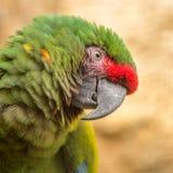Vogel papagayo Kopf, Beschaffenheit, Stockfotos
