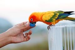 vogel, papegaai Stock Afbeeldingen
