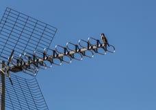 Vogel in parabolische antenne stock afbeelding