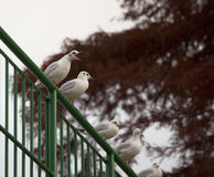 Vogel-Park Seeangriff lizenzfreies stockfoto